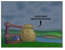 Seamour Sheep - Herfst / Automne